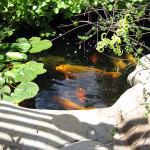 Fish enjoy conditioned and filtered water