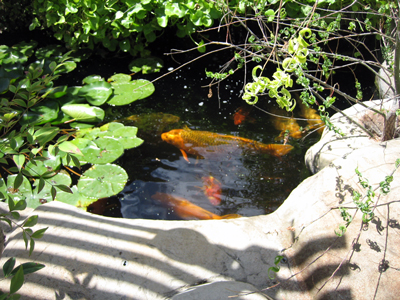 Koi pond is filtered water